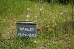 Rustic Wild Flower Sign with Flower Backup stock photo