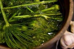 Homemage замариновало фото еды натюрморта огурцов Стоковые Изображения RF