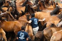 Homens e cavalos Fotografia de Stock