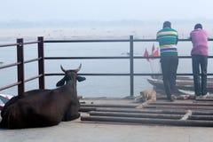 Homens indianos com o búfalo que descansa no ghat em Varanasi, Índia Imagens de Stock Royalty Free