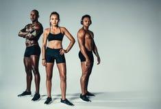 Homens novos e mulher saudáveis com construção muscular Fotos de Stock Royalty Free