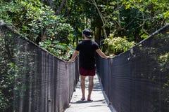 Homens novos que viajam em uma selva tropical em um dia de verão em uma ponte de madeira imagem de stock