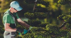 Homens que dão forma a árvores do jardim imagem de stock