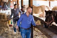 Homens que dão o chapéu ao cavalo Foto de Stock Royalty Free