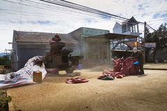 Homens que trabalham na máquina de classificação dos feijões de café na rua o 11 de fevereiro de 2012 em Nam Ban, Vietname Fotografia de Stock