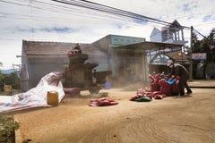 Homens que trabalham na máquina de classificação dos feijões de café na rua o 11 de fevereiro de 2012 em Nam Ban, Vietname Imagens de Stock Royalty Free