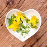 Homeopatía y el cocinar con la hierba de San Juan foto de archivo libre de regalías