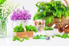 Homeopatía, medicinas Imágenes de archivo libres de regalías