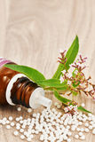 Homeopathic granules scattered on a wooden table. Homeopathic granules scattered around a glass bottle and a medicinal plant on a wooden table. Vertical image Stock Images