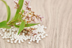 Homeopathic granules scattered on a wooden table. With a medicinal plant Stock Images
