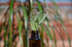 Homeopathic remedy bottle and plant Stock Photos