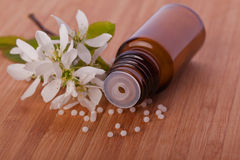 Homeopathic therapy. White blossom homeopathic therapy  globule Stock Photo