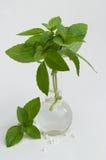 Homeopathie Royalty-vrije Stock Afbeelding