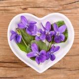 Homeopathie en het koken met altviool stock foto's