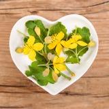 Homeopathie en het koken met celandine Stock Foto