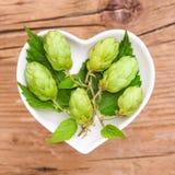 Homeopathie en het koken met hop Stock Afbeelding