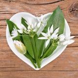 Homeopathie en het koken met wild knoflook stock afbeeldingen