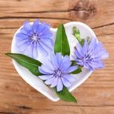 Homeopathie en het koken met witlof Royalty-vrije Stock Afbeelding
