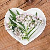 Homeopathie met valeriaan Stock Foto