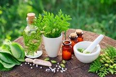 Homeopathische flessen, Thuja-occidentalis, de belangrijk drugs van Plantago en mortier royalty-vrije stock fotografie
