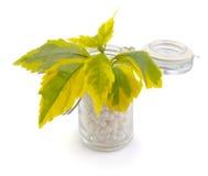 Homeopathische Geneeskunde Stock Fotografie