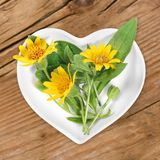 Homeopathy And Cooking With Arnica Royalty Free Stock Photography
