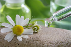 Homeopathy - Chamomile flower with pipette Stock Photography
