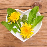 Homeopathy and cooking with dandelion Stock Photo