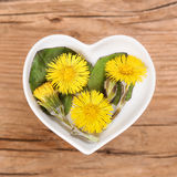 Homeopathy and cooking with coltsfoot Stock Photography