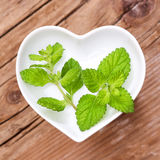 Homeopathy and cooking with lemon balm stock image