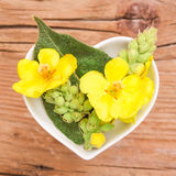 Homeopathy and cooking with mullein Stock Photography