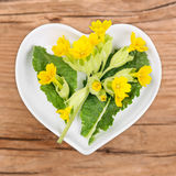 Homeopathy and cooking with primrose Stock Image