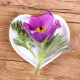Homeopathy and cooking with pulsatilla Royalty Free Stock Photos