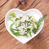 Homeopathy and cooking with silver yarrow Stock Photo