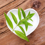Homeopathy and cooking with verbena. Verbena for homeopathy, cooking or tea Stock Photography