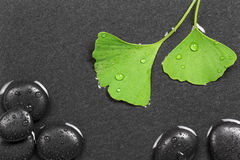Homeopathy with hot stones and ginkgo Royalty Free Stock Photos