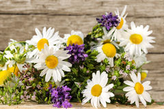 Homeopathy with medicinal herbs Stock Images