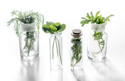 Homeopathy. Medicinal herbs in glass on white background Stock Photos