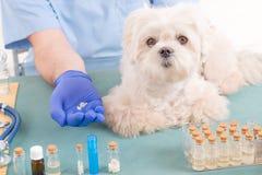 Homeopati för en hund royaltyfri bild