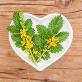 Homeopati och matlagning med agrimonyen arkivbild
