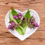 Homeopati och matlagning med vallört arkivfoto