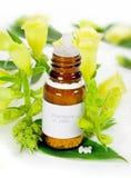 homeopatia Obraz Royalty Free