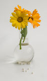 Homeopatia Foto de Stock