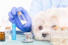 Homeopatia dla psa obraz stock