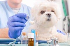Homeopatia dla psa zdjęcia stock