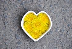 Homeopatia i kucharstwo z dandelion obrazy stock