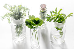 homeopatia Leczniczy ziele w szkle na białym tle zdjęcia stock