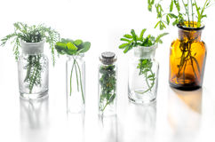 homeopatia Leczniczy ziele w szkle na białym tle Zdjęcia Royalty Free