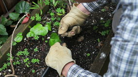 Homeowner installs garden sprinklers stock video
