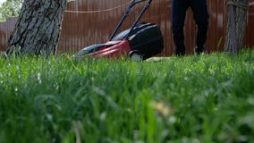 Homeowner working in garden uses lawnmower to mow a lawn. Man cutting grass in his yard with electric lawn mower. Low angle shot stock video